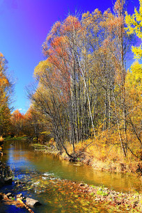 山溪树林秋色