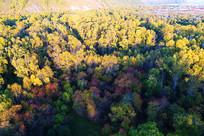 树林秋色秋景