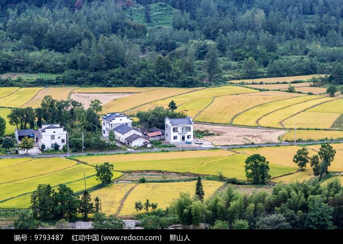 金黄的田野