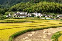 金色的村落