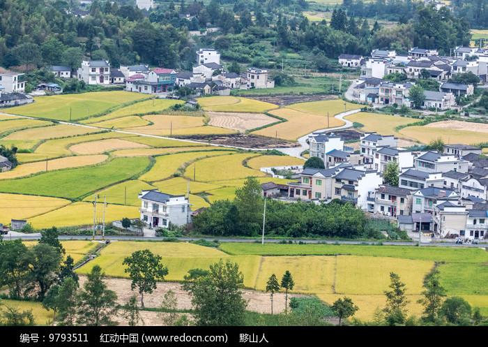 田间的村落