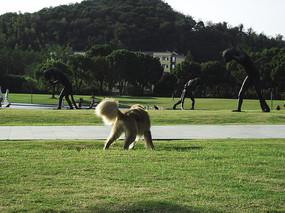 草地上玩耍的狗狗