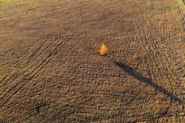 草甸上一棵金色树木