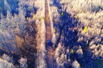 汽车行驶在晚秋树林山路