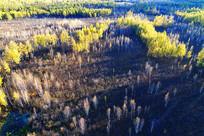深秋的白桦林风景