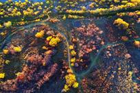 五彩树丛中的羊肠小道