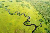 森林曲水之最的河流