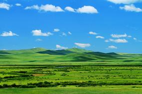 绿色的山野草甸
