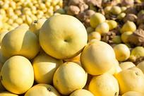注溪哨坪柚子