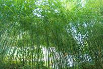 户外郊外大自然中的竹林