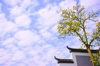 秋季黄叶蓝天岳麓书院复古建筑