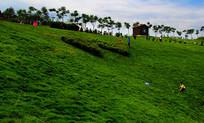 万州欢乐黄金谷的草地