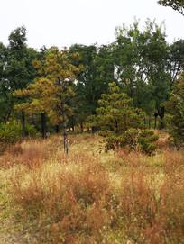 秋天树林草地
