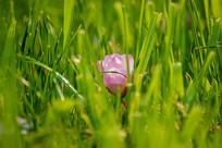 落在草丛中的海棠花