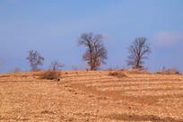 田野上的树乡村风光