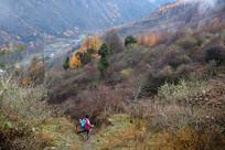 卧龙卓西牧场秋天的彩林