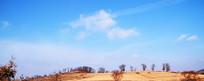 远树蓝天乡村风光