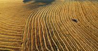 收割机正在收割的农田秋景