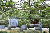 红薯树果园