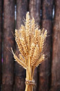 麦穗束小麦