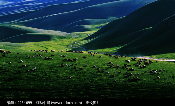 牛羊成群图片
