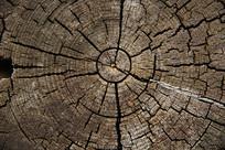 树年轮破面树干