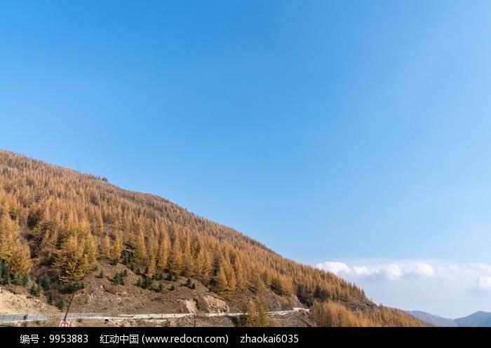 秋季山上的植被图片