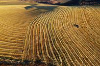 正在收割的农田秋景(航拍)
