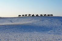 远山骆驼队