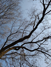 苍凉的树枝