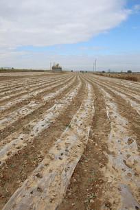 农田薄膜收获丰收