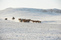 远山的马群