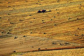 金色的农田收草的收割机