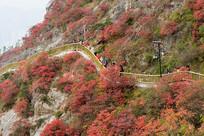 巫山红叶和户外健身步道