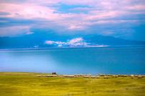 赛里木湖牧场