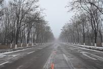 冬季林荫大道柏油马路