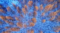 航拍林海雪原红树林
