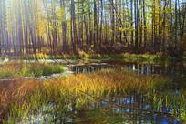 小溪彩林灿烂秋色