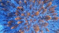雪原红树林(航拍)
