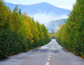秋天道路景色