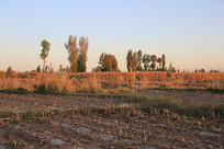 收割后的庄稼地