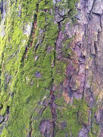 绿苔自然树纹