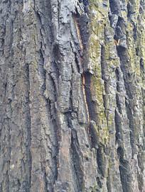 自然老树树纹