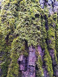 自然绿色树纹