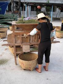 花椒初加工扬谷机脱壳生产工序