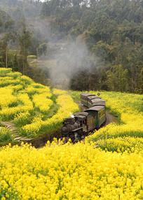 油菜花海和蒸汽小火车