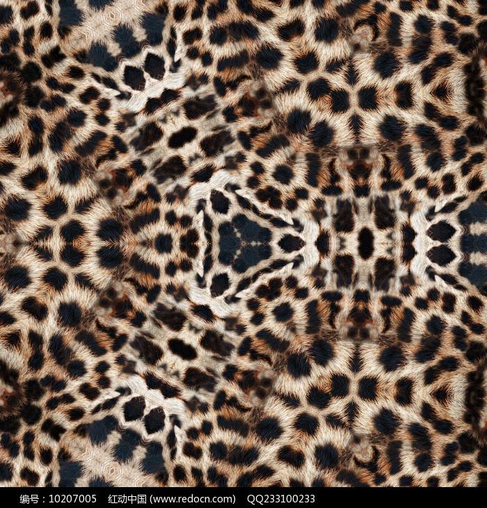 豹纹图案图片