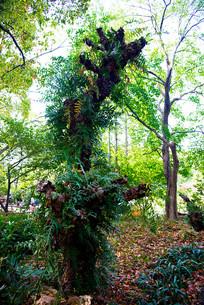 长满枝叶的树干