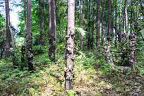 奇怪的树林