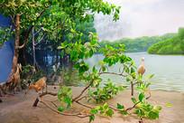 鸟类生态系统复原场景